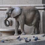 ゾウのイメージ