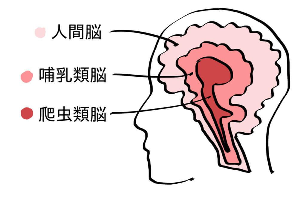 人間の脳の構造